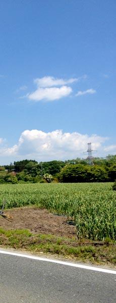 田子町の田園風景