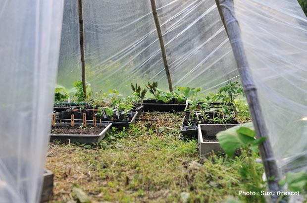 ビニールハウスのなかで育つ農作物