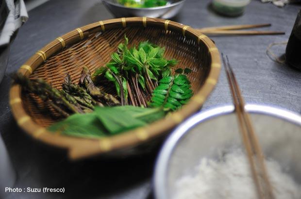 タラの芽、こしあぶら、山椒、コンフリー