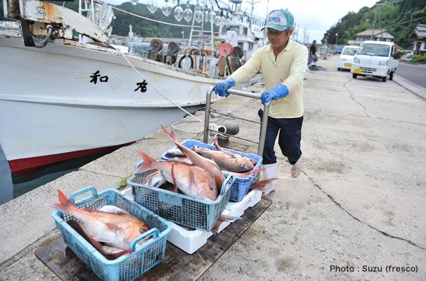 イカ以外にもたくさんの魚介類が水揚げされる