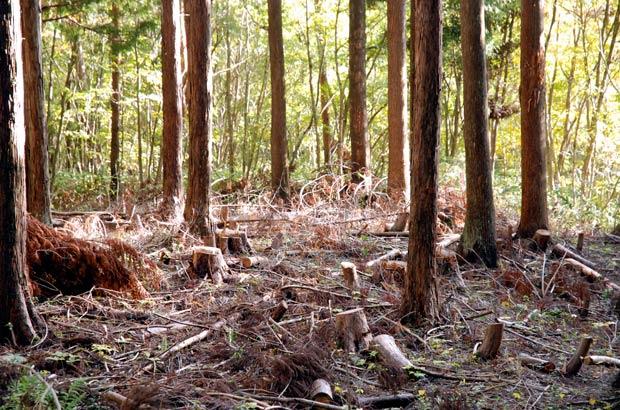 間伐された森