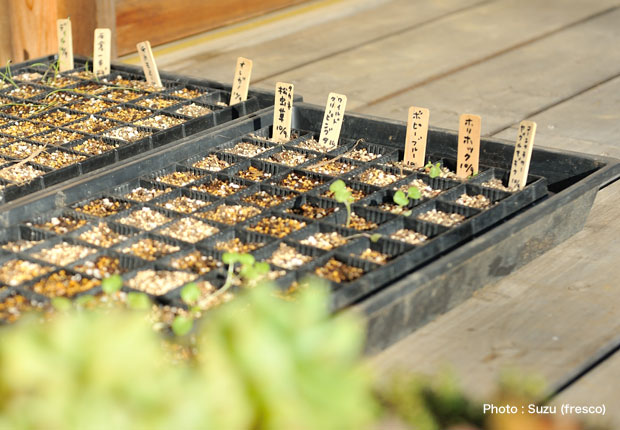 里山長屋で育てられていた種たち