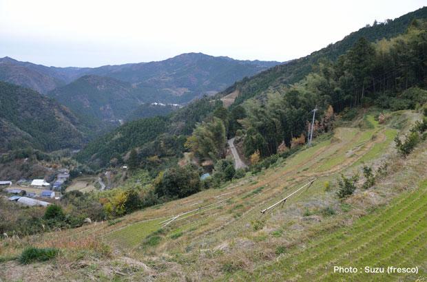土佐山の里山風景