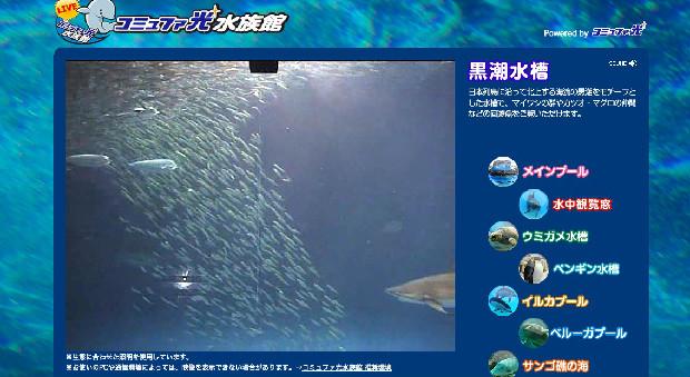 もうサボれない!名古屋港水族館のマイワシがピンチ 「colocal コロカル」ローカルを学ぶ・暮らす・旅する
