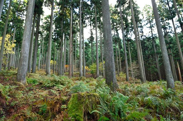 西粟倉村の森林