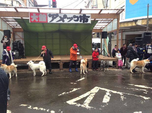 秋田犬のパレード