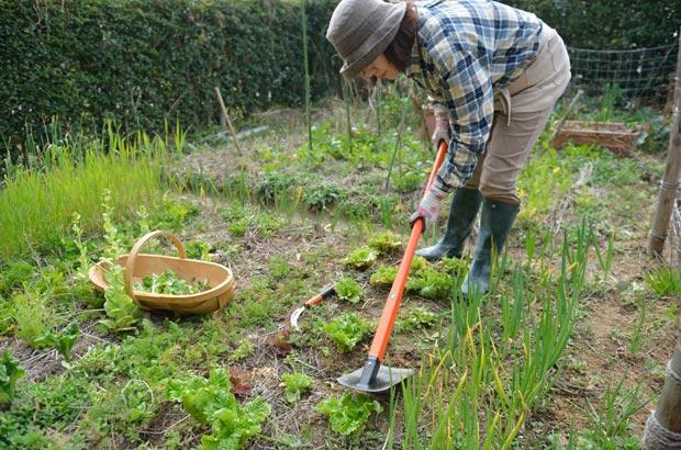 素敬の自然農園での農作業の様子