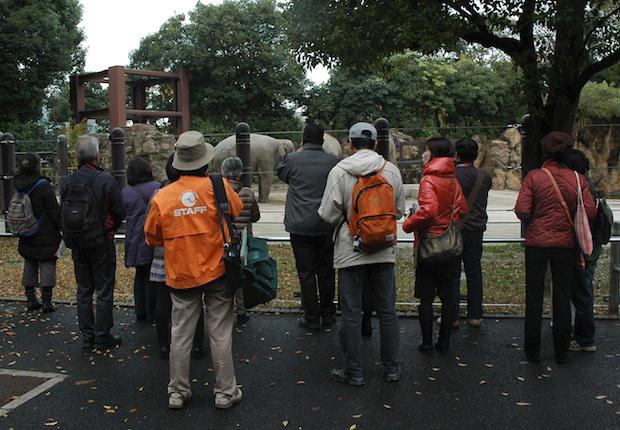 東京の「大人のための動物園・水族園講座」動物園が大人限定の講座を開催!動物解説員さんと動物のふしぎにせまる。