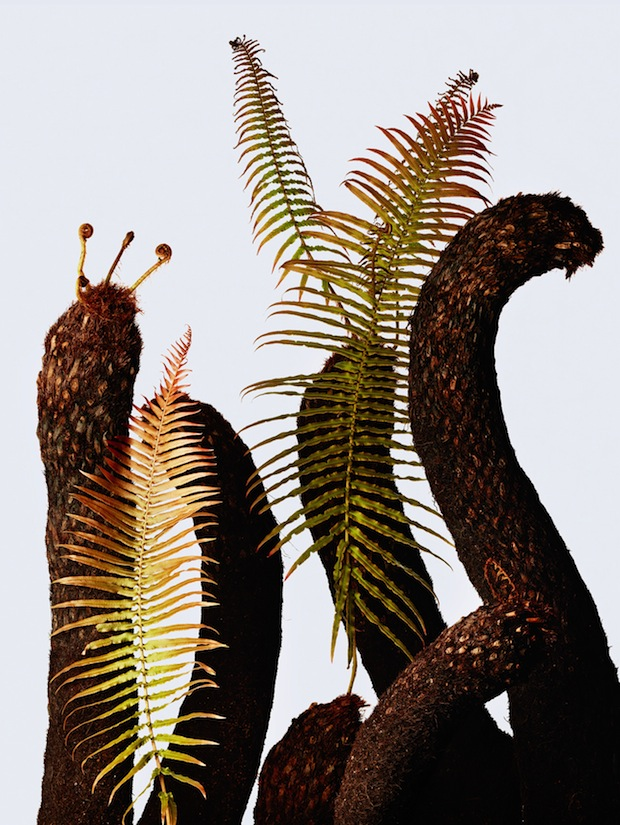 ゾクゾク、わくわくする 植物が大集合! プラントハンター・西畠清順さんの 「ウルトラ植物博覧会」