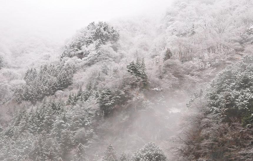 ちちぶメープルプロジェクト vol.3 2016年、樹液シーズンスタート!