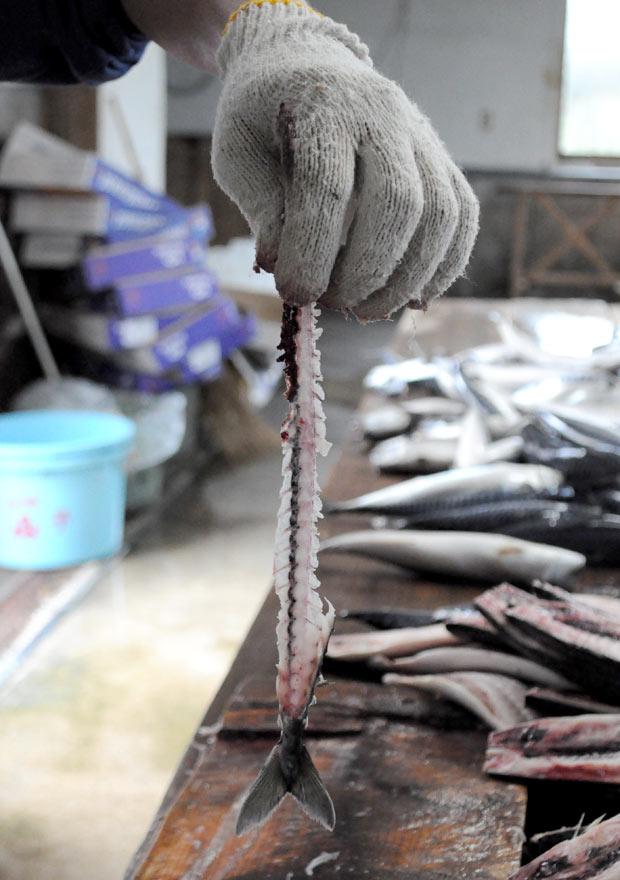 これぞ、職人技。鯖の背骨しか残らないので、歩留まりがほぼ100%。