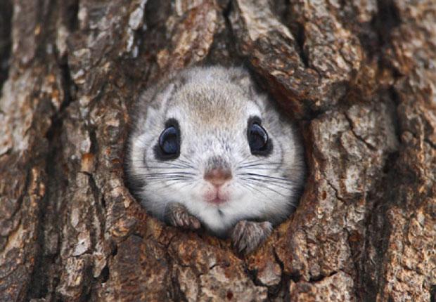 愛くるしすぎる!北海道の森に暮らすエゾモモンガの写真集『モモンガだモン!』