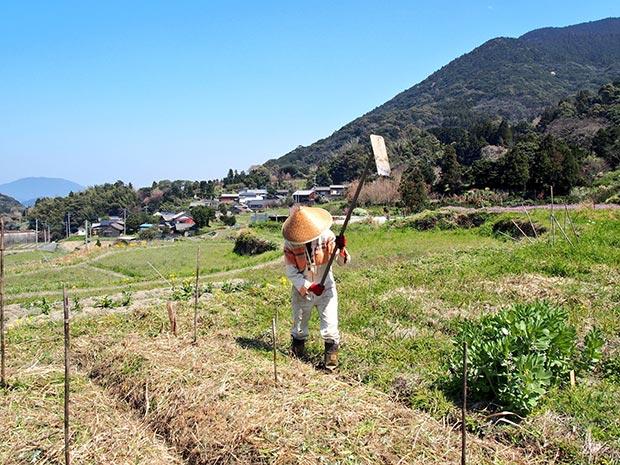家の近くの小さな畑。自然農をベースに、無農薬・無肥料で野菜を育てています。