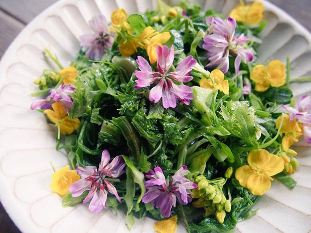 今日のシェアハウスごはん。テーマは0円ごはん! 100%野草のサラダです。小洒落たいい方をすると、エディブルフラワー。