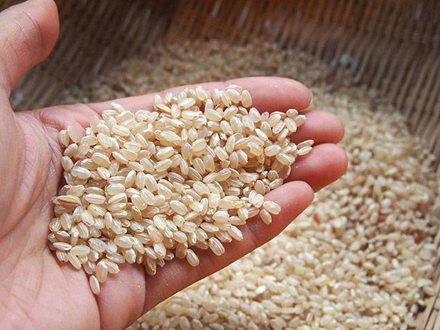 収穫した玄米。食べる直前に精米します。