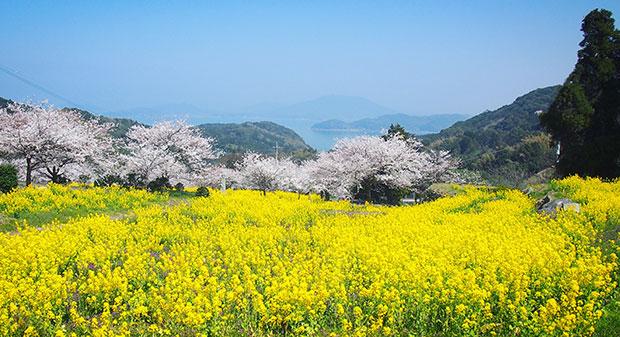 まるで絵本の世界のような我がいとしまシェアハウスがある集落。桜の先には海も見えます。