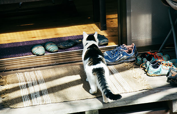 松島さんの自宅に迷い込んできて以来、一緒に暮らしているというネコ。