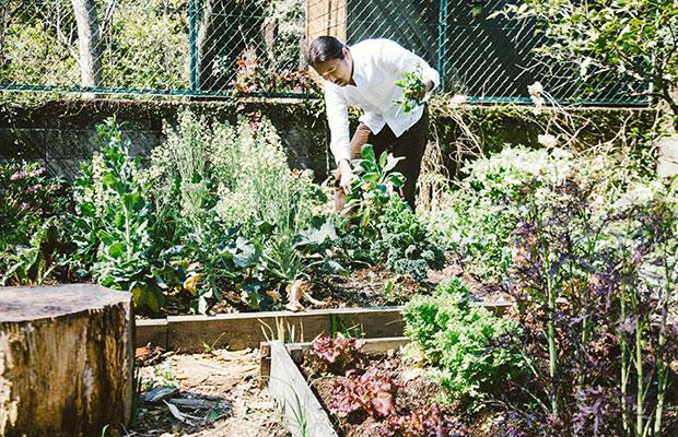 庭の手入れは主に松島さんの担当だが、「自然農法」という名の放任主義だという。