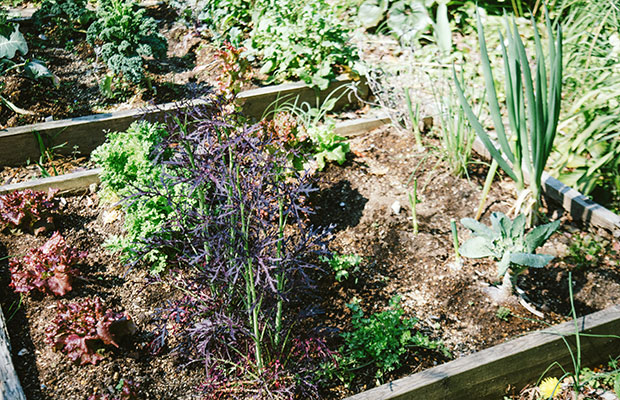 庭では、ブロッコリー、ネギ、ルッコラ、ケール、スイスチャードなど、さまざまな野菜が栽培されている。