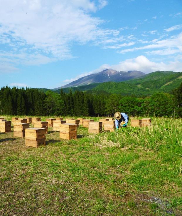 ぷち養蜂場