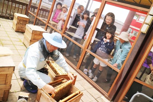 ぷち養蜂場風景