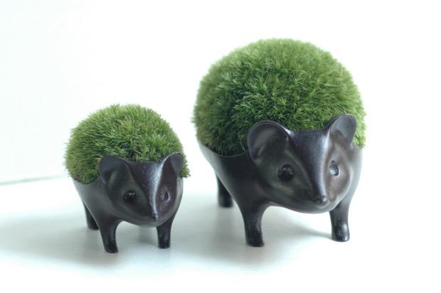 苔盆栽 はりねずみ 子7,020円/親10,800円(税込)