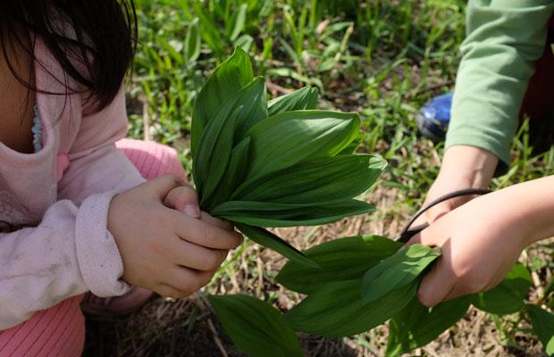 わたしの息子と娘もトシくんの畑で行者ニンニクを収穫した。