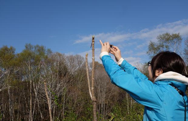 わたしたちの山に山菜のシーズンが。「タラの芽だ〜」とスマートフォンで写真を撮る宮浦さん。