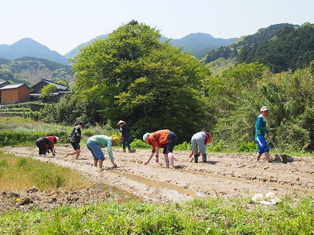 今年のお米の種下ろしの様子。