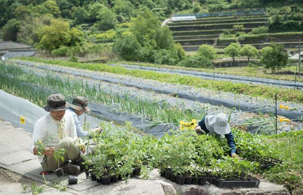 夏野菜の定植。トマトやピーマン。