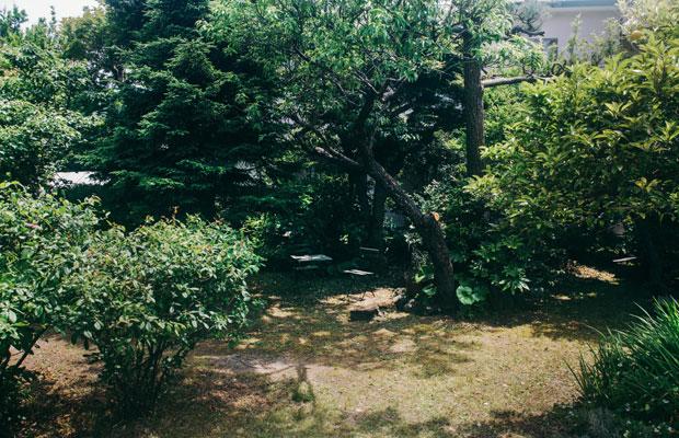 夏みかんや月桂樹の木、ミント、ローズマリーなどのハーブ類が植えられている〈蕾の家〉の庭。