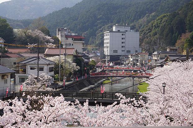 2018年4月1日の長門温泉まつりは満開の桜に恵まれた。