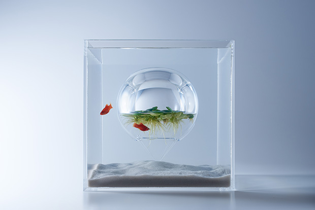 『水の中の温室・気球型』(ガラス製)展示生物:プラティ アマゾン・フロッグビット(水草)