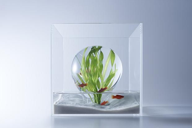 『水上の水中・マッシュルーム型』(ガラス製)展示生物:プラティ、ハニードワーフグラミー、バリスネリア・スピラリス(水草) 、スクリュー・バリスネリア(水草)