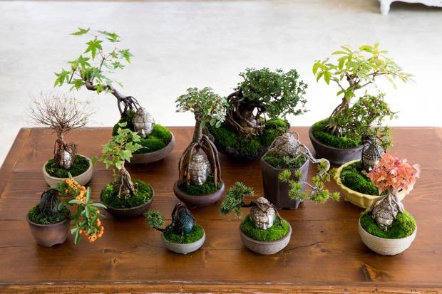 いろいろな仏像盆栽