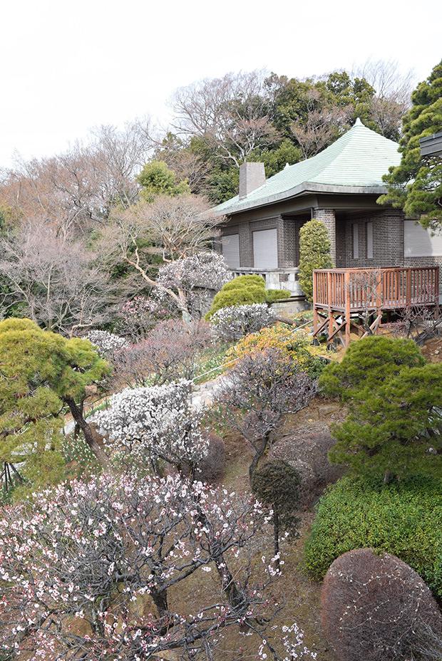 静嘉堂文庫美術館の庭園(春)