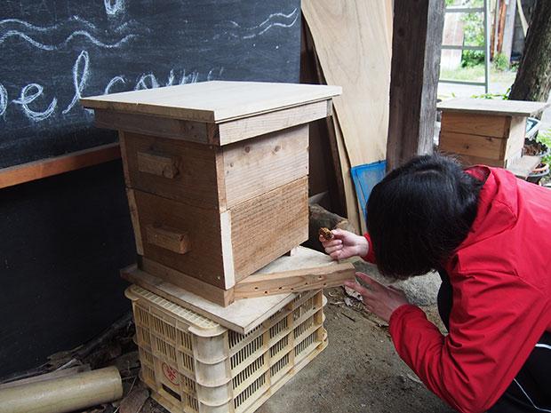 巣箱に蜜蝋を塗ると、ミツバチたちが入居しやすいのだとか。