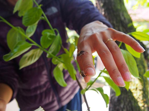 ミツバチに挨拶。慣れると手に乗ってくれます。