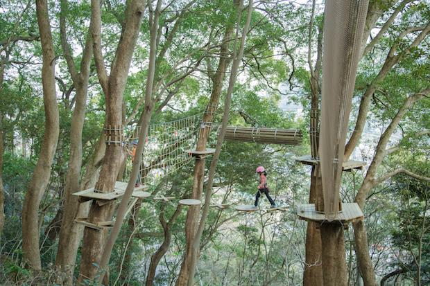 昼の「森の空中散歩」。木と木の間をつなぐコースを歩けば、地上からは見えない世界が広がります。