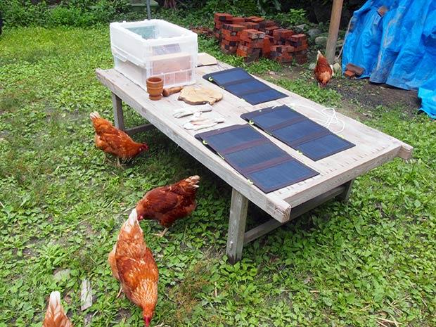 天気がいい日は鶏と一緒に庭で発電。和みます。