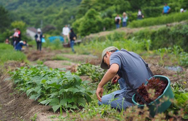 春から夏にかけて収穫できる野菜が日々変わります。