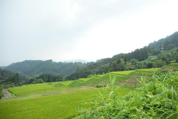 美しい棚田の風景。