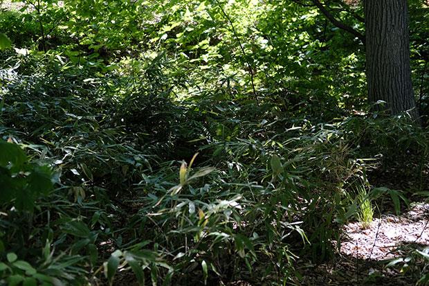 春の遅い洞爺湖畔は、5月から6月にかけて植物たちが一斉に茂り出す。