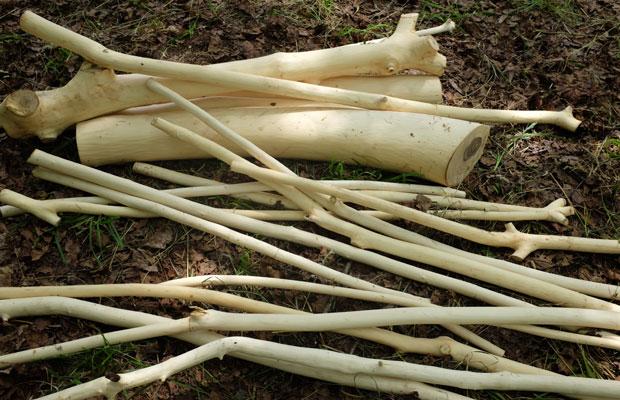 樹皮をはいだ後の木の芯。これも何かに使えそう?