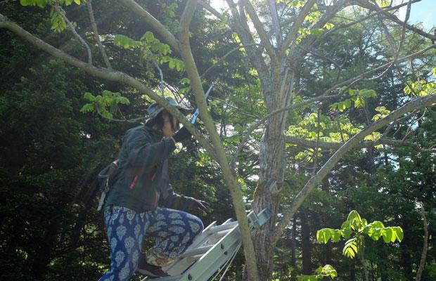 今回、長谷川さんのワークショップは〈みどりのおやゆび・チュプ〉が管理する岩見沢の山里でも行われた。この団体が中心となって長谷川さんのワークショップや樹皮採取を実施。〈みる・とーぶ〉も連動するかたちで企画に関わった。