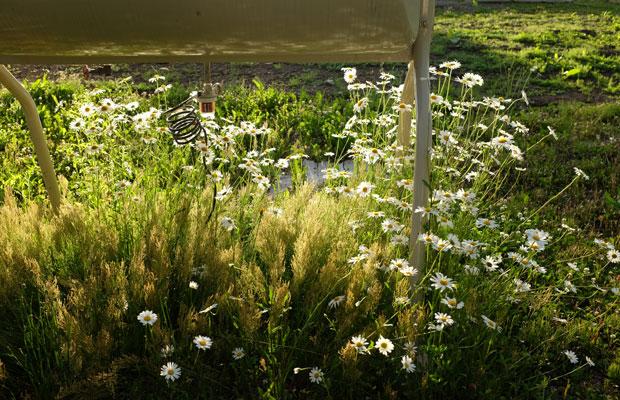 雑草を見る目も変わった。「この茎でもしかしたら縄が編めるかも」と妄想することもしばしば。