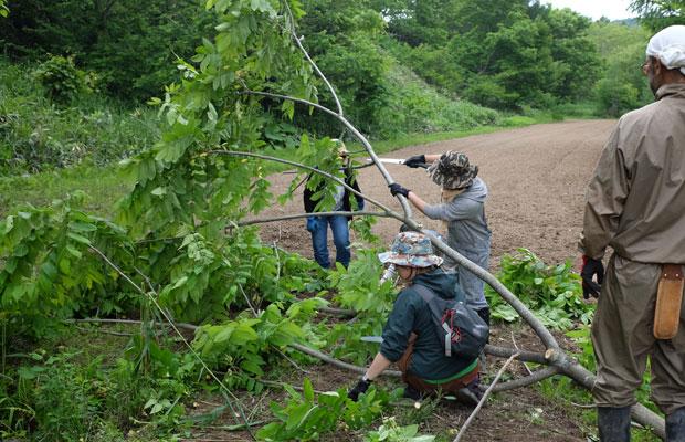 木を切り倒したら、葉っぱを取って枝をカット。
