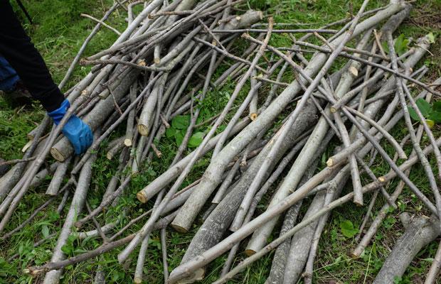 細い枝も捨てない。できる限り素材として使いたいと長谷川さんは考えている。