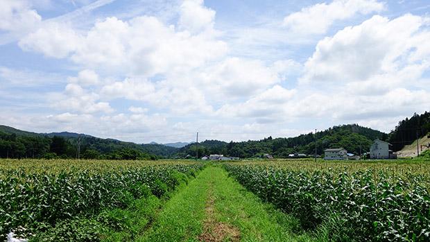 芦農園〉の風景