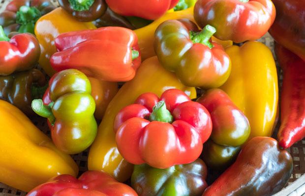 完熟したピーマン。野菜が美しいから、サラダも美しくなります。